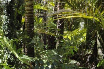 La Mère de l'Amazonie