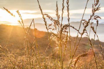 Covid-19 : relire nos vies
